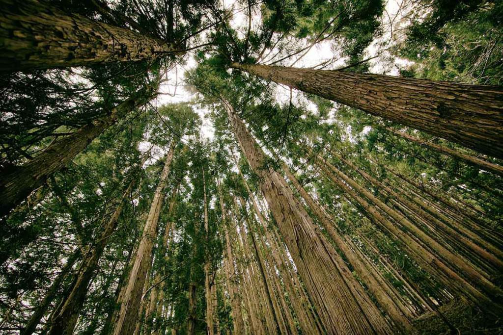 alberi secolari nei boschi umbria