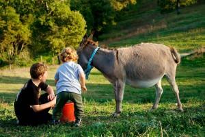 bambini che giocano con animali in agriturismo umbria