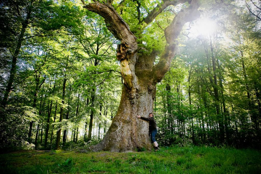 contatto con alberi e piante per riequilibrio metabolico