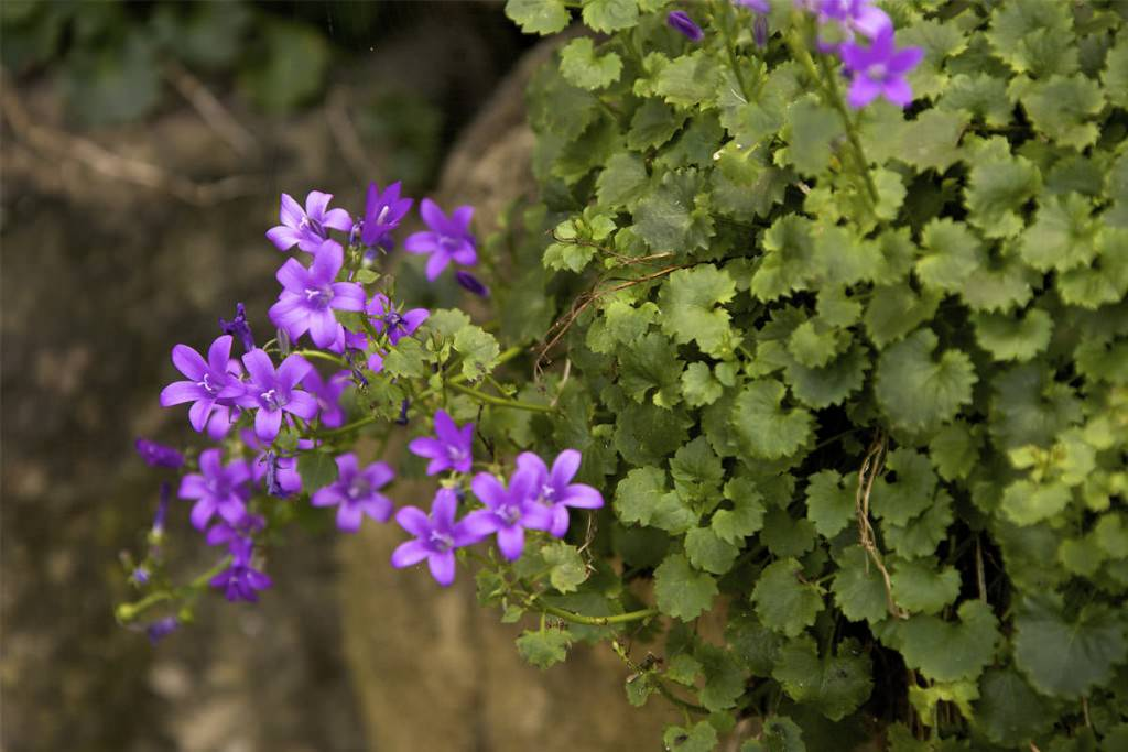 piante e fiori agriturismo la castellana assisi