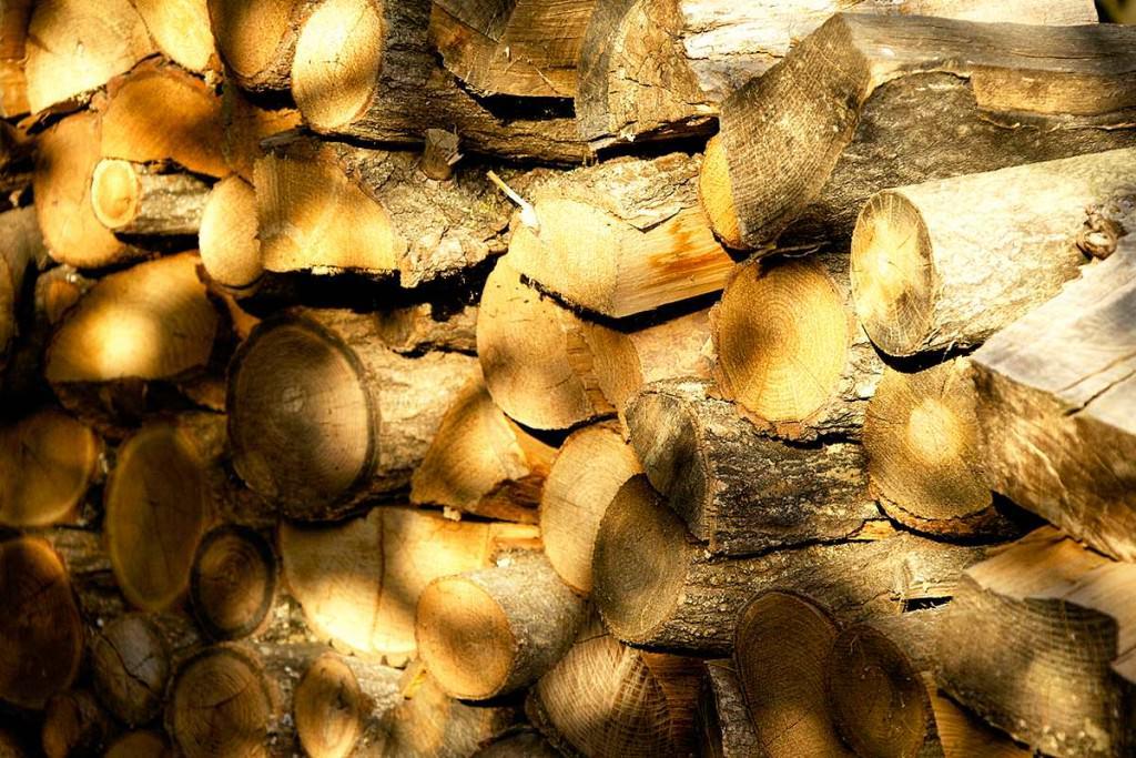 legna e alberi nei boschi di assisi