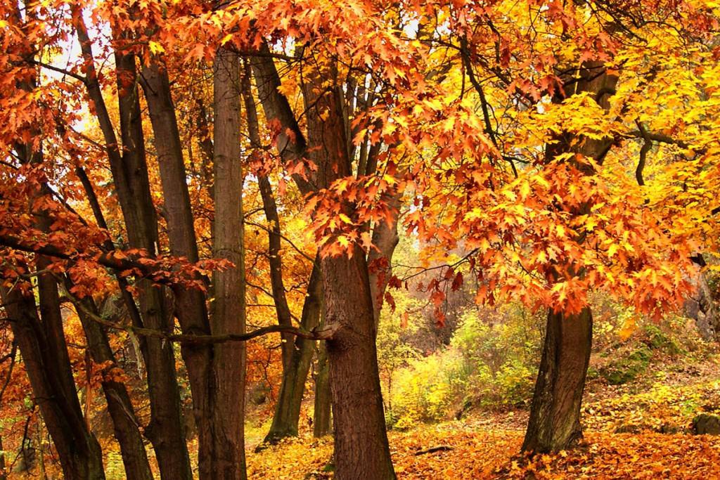 meditazione e relax psicofisico nei boschi umbri